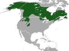 220px-Canada_Lynx_area (1)
