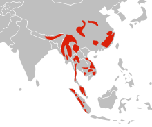 220px-Distibution_map_of_Asian_Golden_Cat.svg