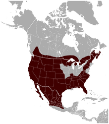 Bobcat_Lynx_rufus_distribution_map