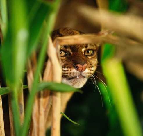 Baycat2