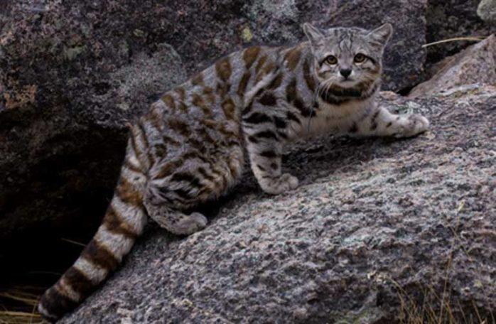 7-cat-768x502
