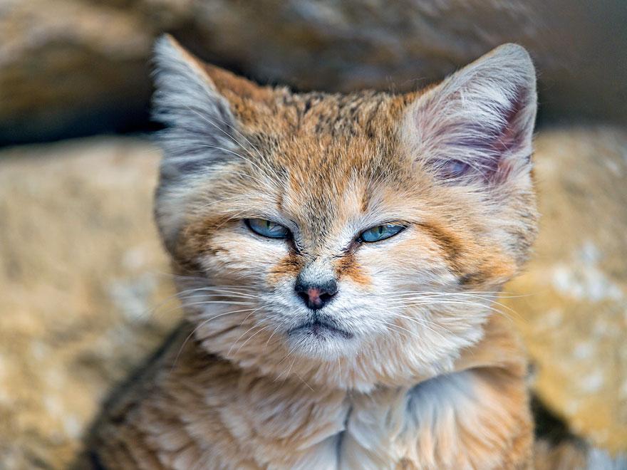 sand-cats-kittens-forever-2__880