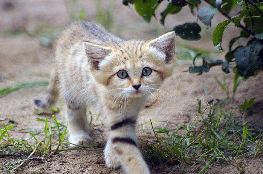 sand-cats-kittens-forever-6__880