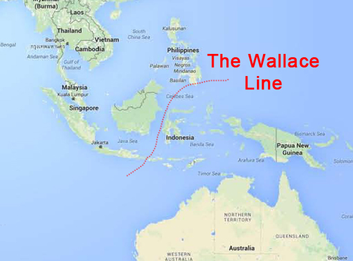 the_wallace_line1